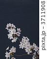 桜 3711908