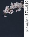 桜 3711910