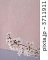 桜 3711911