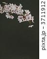 桜 3711912