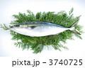 生魚 鰤 出世魚の写真 3740725