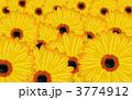花 開花する ガーベラのイラスト 3774912