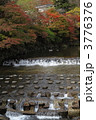 紅葉 高野川 八瀬の写真 3776376