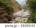 かずら橋 祖谷渓 橋の写真 3836545