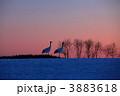 鶴 丹頂 タンチョウの写真 3883618