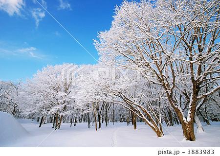 冬景色 3883983