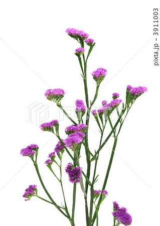 紫色のスターチスの写真素材 3911003 Pixta