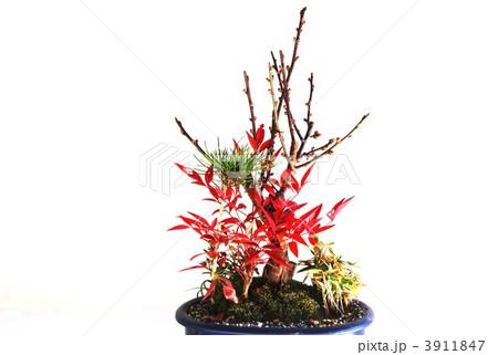 正月盆栽・松竹梅に南天の紅葉・横位置 3911847