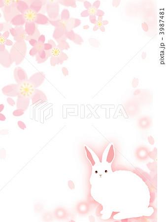 桜とうさぎ 3987481