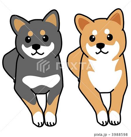 犬 イラスト 柴犬のイラスト素材 3988598 Pixta