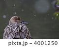 渡り鳥 冬鳥 オナガガモの写真 4001250