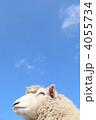 羊と青空 4055734