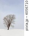 冬の哲学の木 4056710