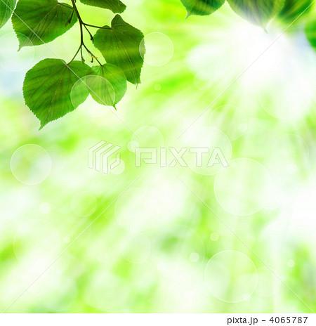 新緑と木洩れ日のイラスト素材 [...