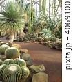 温室 伊豆シャボテン公園 覇王樹の写真 4069100