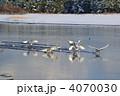 白鳥 4070030