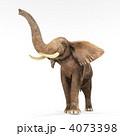 陸上動物 象 アフリカゾウのイラスト 4073398
