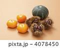 くり 毬栗 栗の写真 4078450