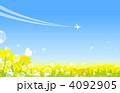 菜の花畑 4092905