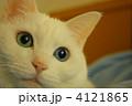 ウチネコ 4121865