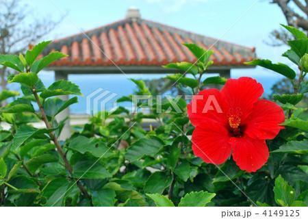 沖縄のハイビスカス 4149125
