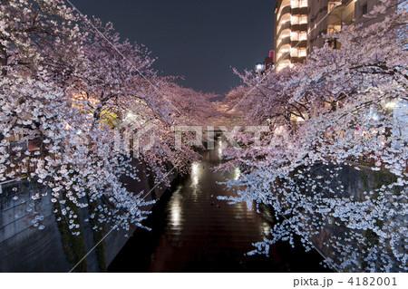 『東京都』目黒川の桜のライトアップ 4182001