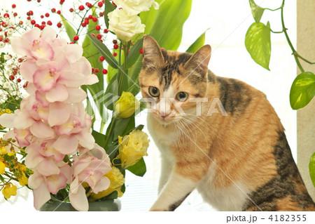 花と猫 4182355