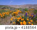 花壇 花畑 花園の写真 4188564
