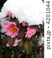 雪の中の色 4201044