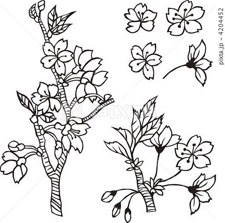 桜モノクロのイラスト素材 4204452 Pixta