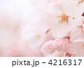 桜の花 4216317