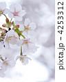 桜 大島桜 オオシマザクラの写真 4253312