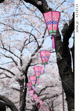 大岡川桜まつりにて 4258514