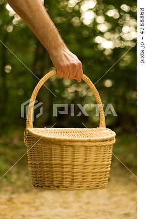 Gathering mushroomsの写真素材 [4288868] - PIXTA