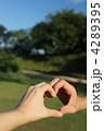 4289395