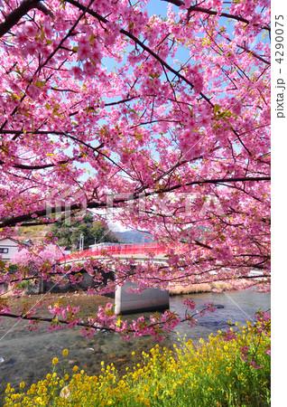 桜 4290075