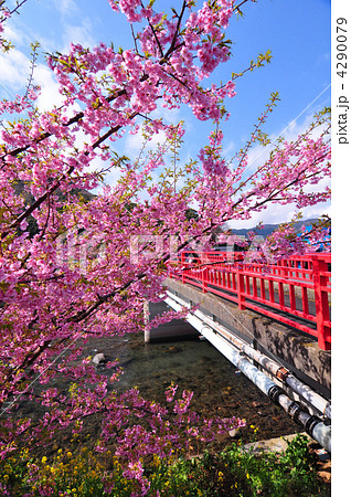 桜 4290079