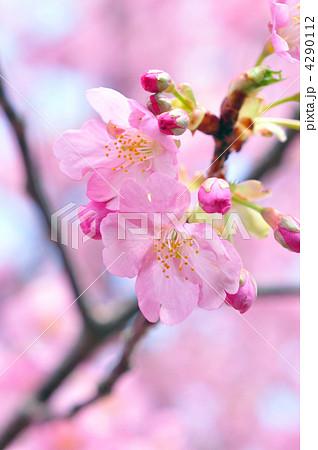 桜 4290112