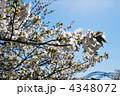 春の新西海橋① 4348072