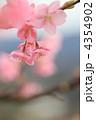 河津桜 4354902