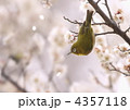 梅とメジロ 4357118