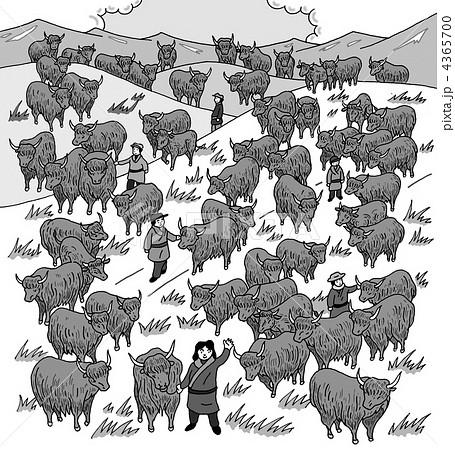 草原の牛達 4365700