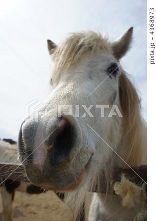 馬の鼻ドアップ 4368973