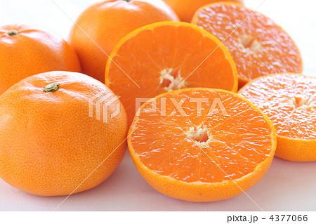 果物 みかん せとか 4377066