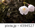 ひっそりと[春] 4394527
