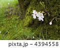 ひっそりと[春] 4394558