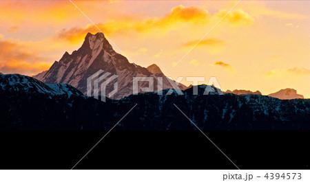 朝陽に映えるヒマラヤの「マチャプチュレ」(アンナプルナ山系/ネパール) 4394573