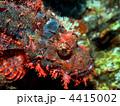 熱帯魚 オニカサゴ 海中の写真 4415002