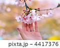 手 花 桜の写真 4417376