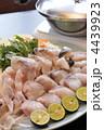 てっさ フグ鍋 河豚鍋の写真 4439923